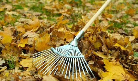 seasonal cleanup feature
