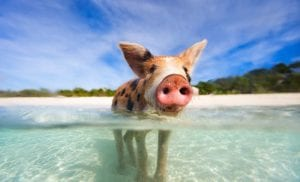 water hogs beware