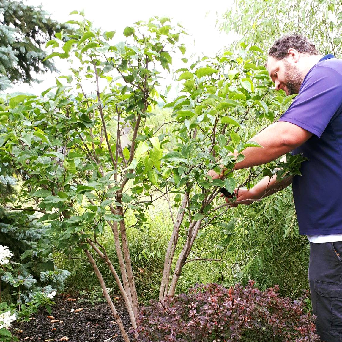 Richard pruning at blue mountain four season