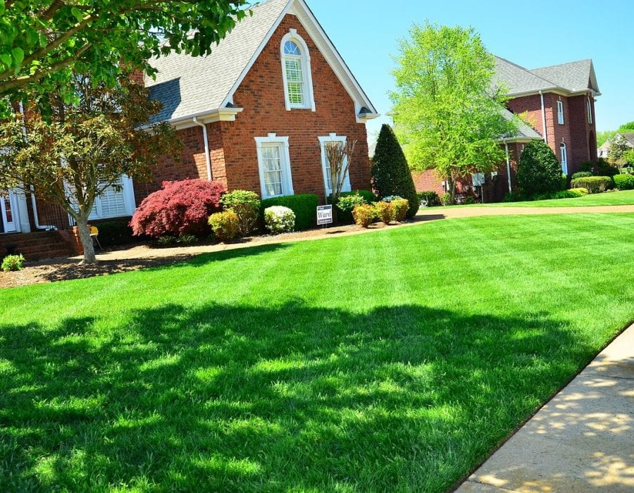 organic lawn care feature